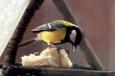 Воспитанники Бобровской ВК приняли участие в акции «Покорми птиц зимой»